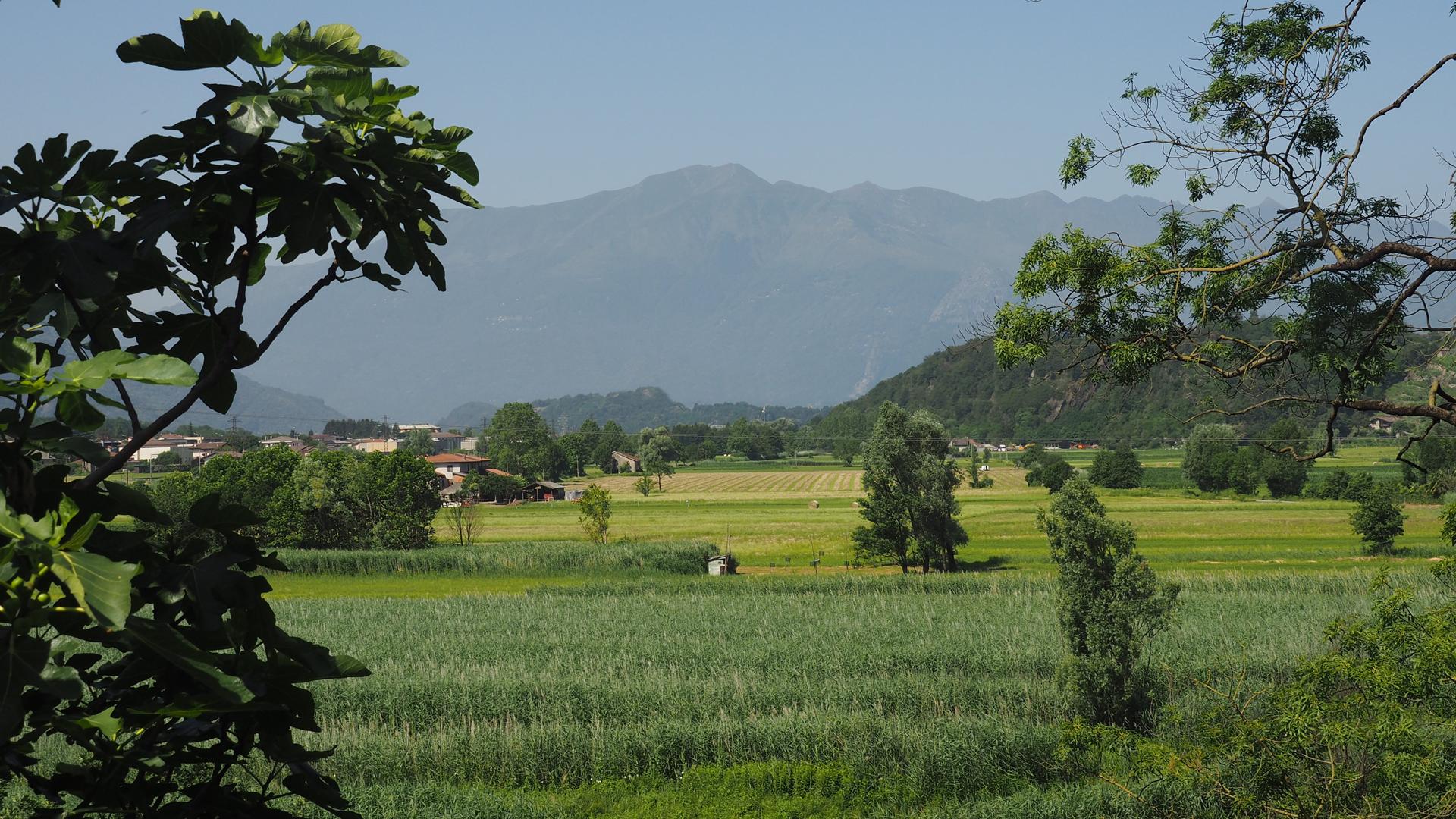 Riserva Naturale del Pian di Spagna-Lago Mezzola